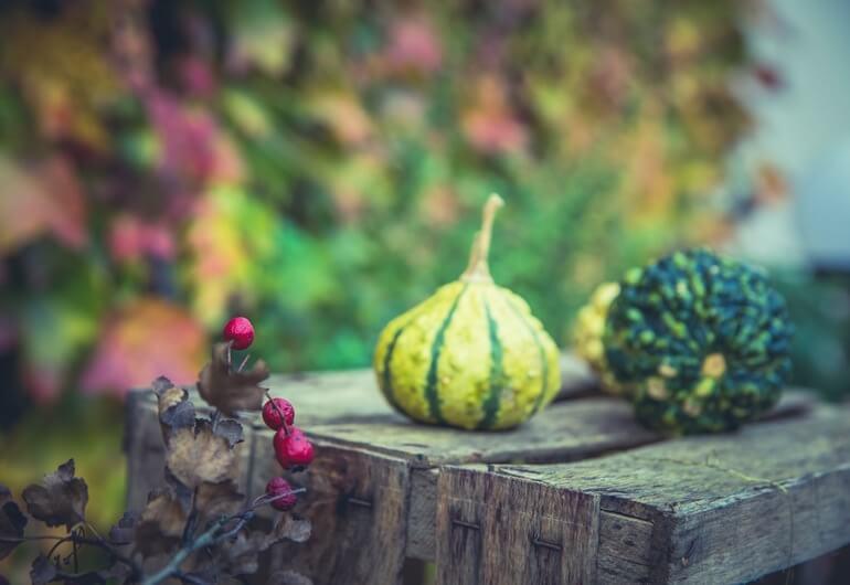 Herbstrezepte von Foodblogs